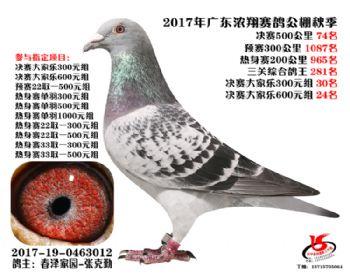 广东浓翔获奖鸽74名