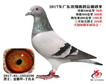 广东浓翔获奖鸽76名