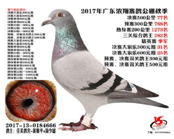 广东浓翔获奖鸽77名