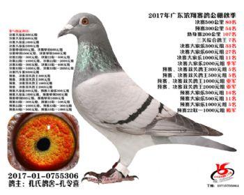 广东浓翔获奖鸽80名