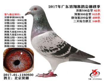 广东浓翔获奖鸽82名