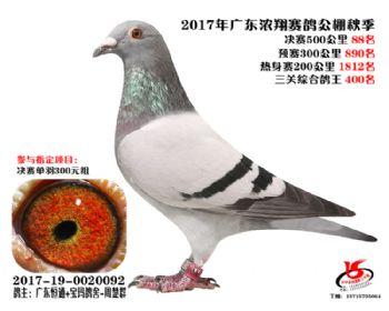 广东浓翔获奖鸽88名