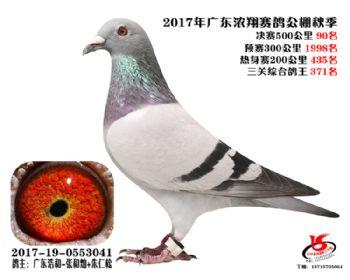 广东浓翔获奖鸽90名