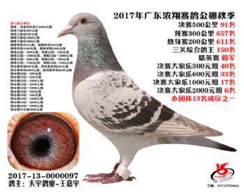 广东浓翔获奖鸽91名