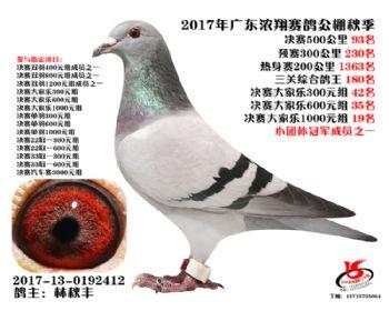 广东浓翔获奖鸽93名