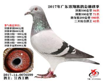 广东浓翔获奖鸽94名