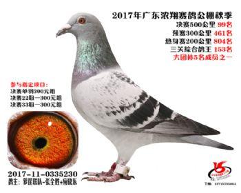 广东浓翔获奖鸽99名