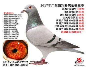 广东浓翔获奖鸽100名