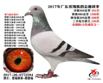 广东浓翔获奖鸽101名