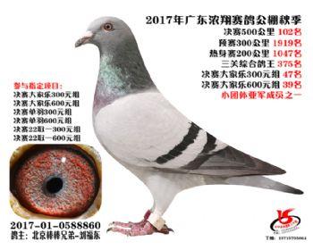 广东浓翔获奖鸽102名