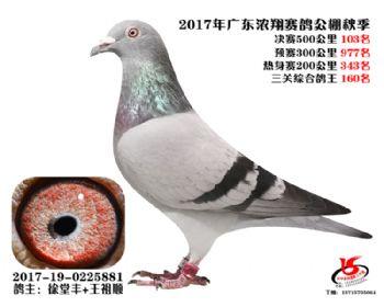 广东浓翔获奖鸽103名