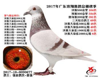 广东浓翔获奖鸽104名