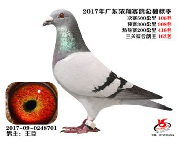 广东浓翔获奖鸽106名