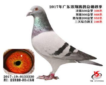 广东浓翔获奖鸽108名