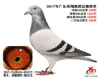 广东浓翔获奖鸽109名