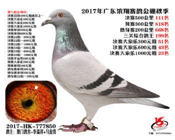 广东浓翔获奖鸽111名