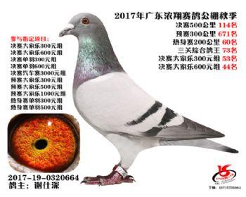 广东浓翔获奖鸽114名