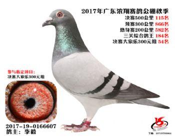 广东浓翔获奖鸽115名