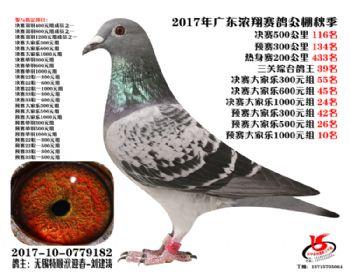 广东浓翔获奖鸽116名