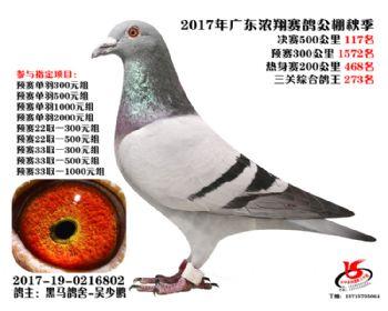 广东浓翔获奖鸽117名