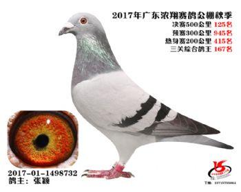 广东浓翔获奖鸽125名