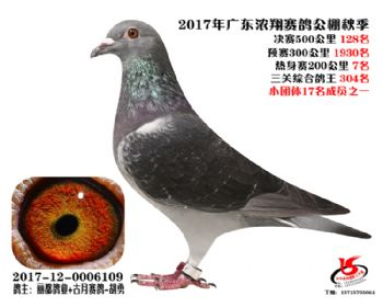 广东浓翔获奖鸽128名