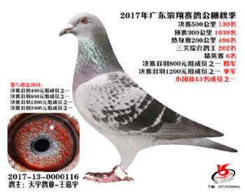 广东浓翔获奖鸽130名