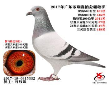 广东浓翔获奖鸽131名