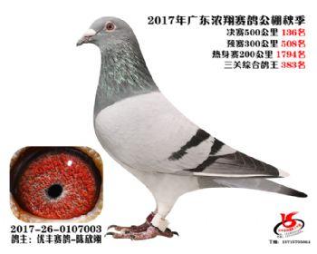 广东浓翔获奖鸽136名