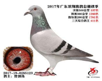 广东浓翔获奖鸽137名