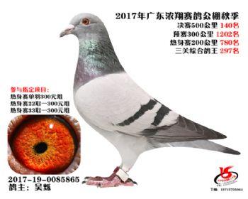 广东浓翔获奖鸽140名