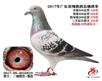 广东浓翔获奖鸽145名