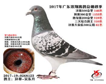 广东浓翔获奖鸽146名