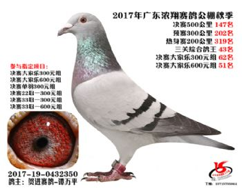 广东浓翔获奖鸽147名