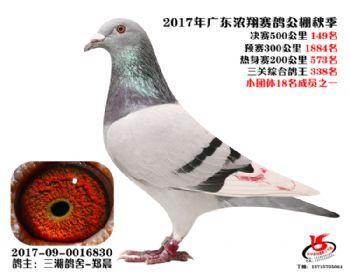 广东浓翔获奖鸽149名