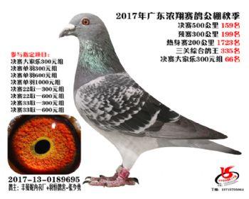 广东浓翔获奖鸽159名