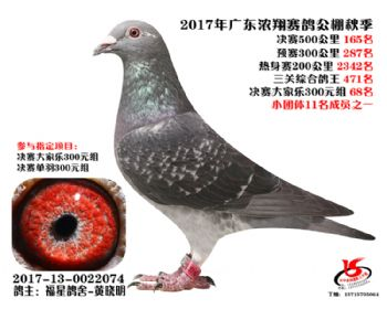 广东浓翔获奖鸽165名