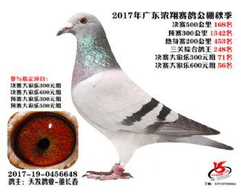 广东浓翔获奖鸽168名