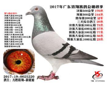 广东浓翔获奖鸽170名