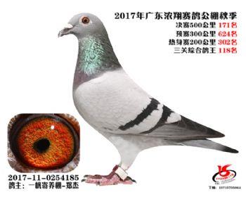 广东浓翔获奖鸽171名
