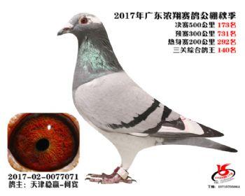 广东浓翔获奖鸽173名