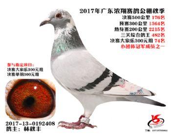 广东浓翔获奖鸽176名