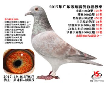 广东浓翔获奖鸽178名