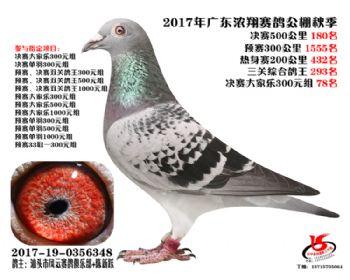 广东浓翔获奖鸽180名