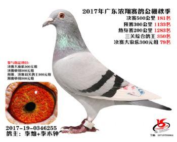广东浓翔获奖鸽181名