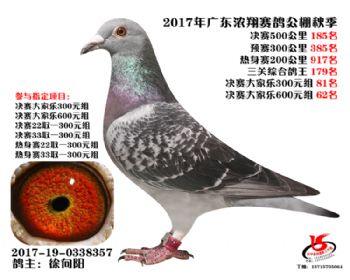 广东浓翔获奖鸽185名