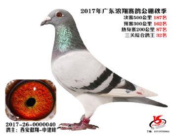 广东浓翔获奖鸽187名
