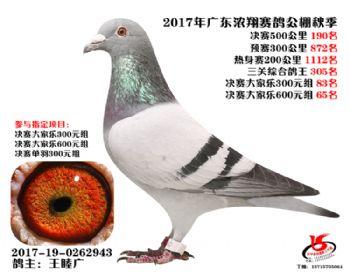 广东浓翔获奖鸽190名