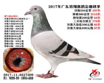 广东浓翔获奖鸽197名