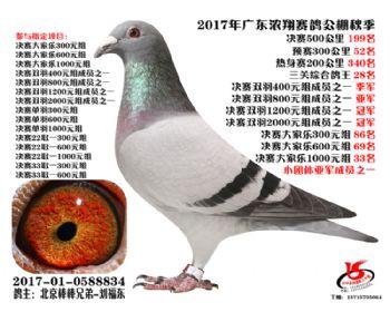 广东浓翔获奖鸽199名